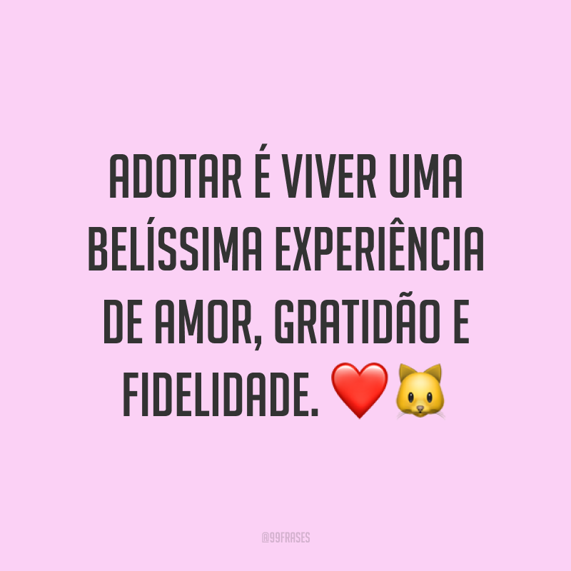 Adotar é viver uma belíssima experiência de amor, gratidão e fidelidade. ❤️🐱