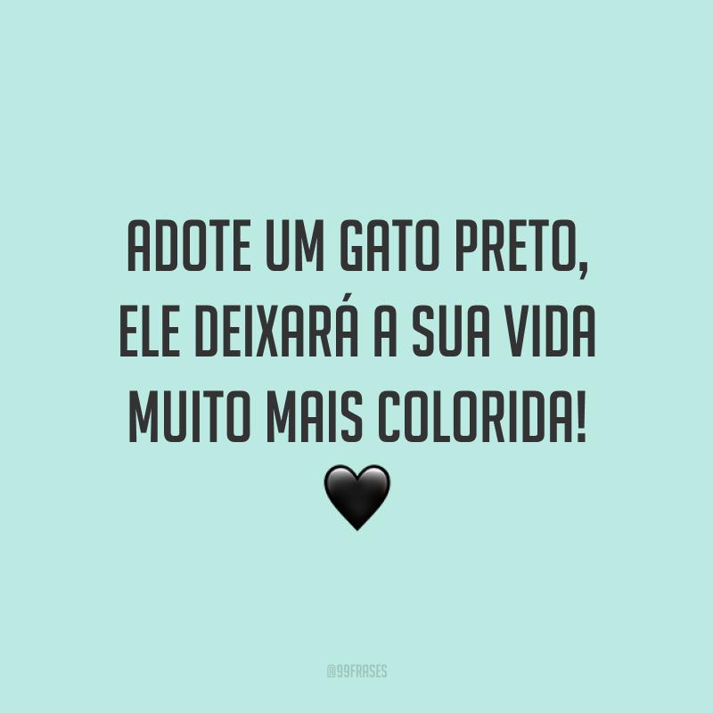 Adote um gato preto, ele deixará a sua vida muito mais colorida! 🖤