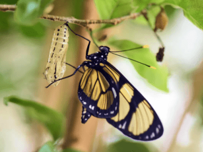 40 frases de evolução para te inspirar a ser sempre melhor