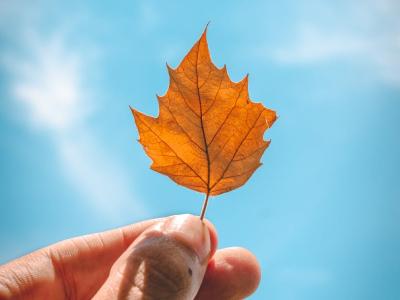 50 frases de outono para aceitar as mudanças do ciclo da vida