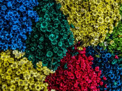60 frases de primavera para celebrar as cores e flores da estação