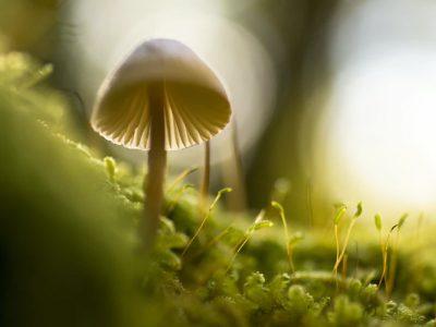 45 frases sobre o meio ambiente para se conscientizar e fazer a sua parte