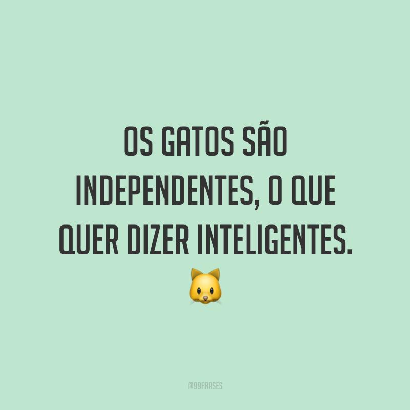Os gatos são independentes, o que quer dizer inteligentes. 🐱