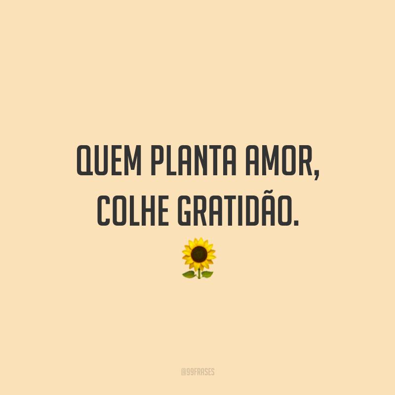 Quem planta amor, colhe gratidão. ?